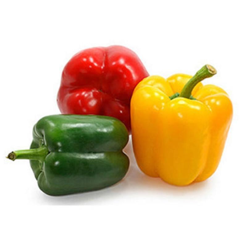 Bell Pepper Suppliers