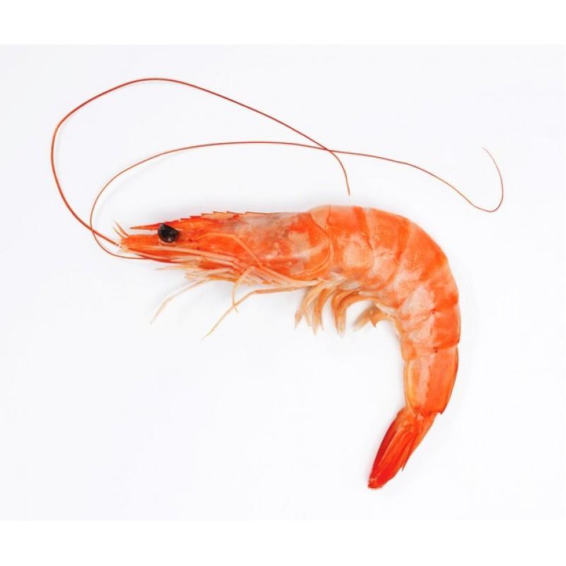Shrimp Fresh & Frozen Suppliers
