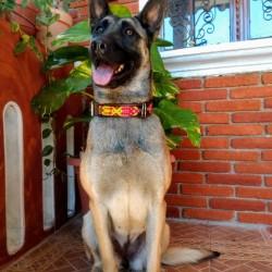 Dog collars Entrehilos