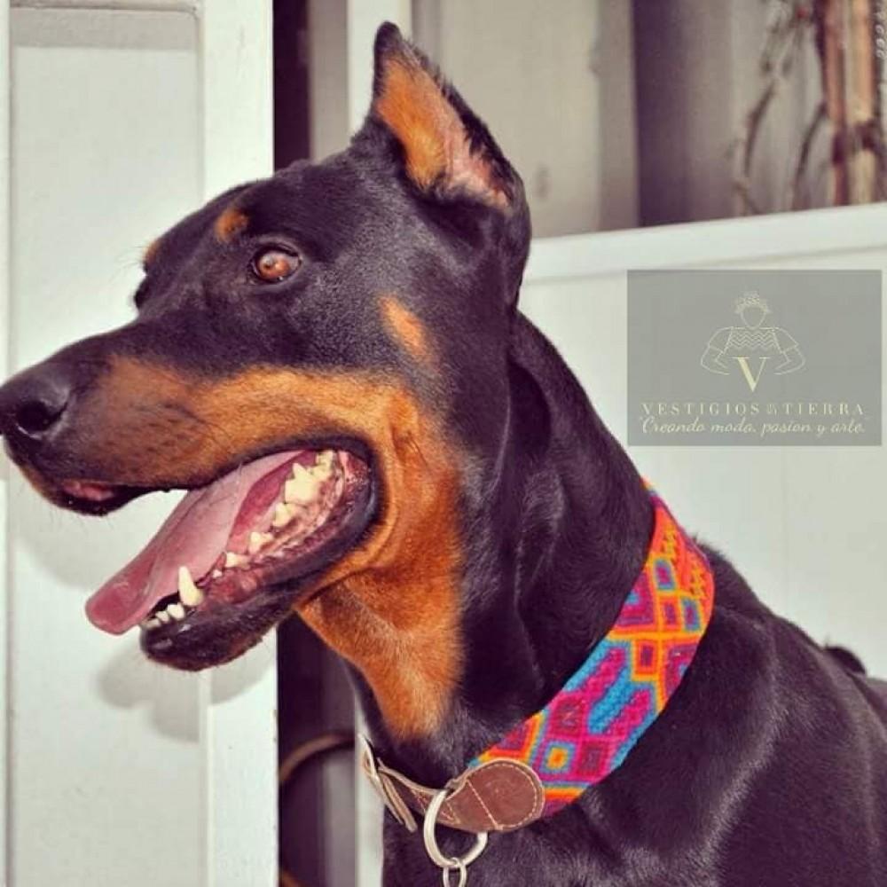 Embroidered dog collars