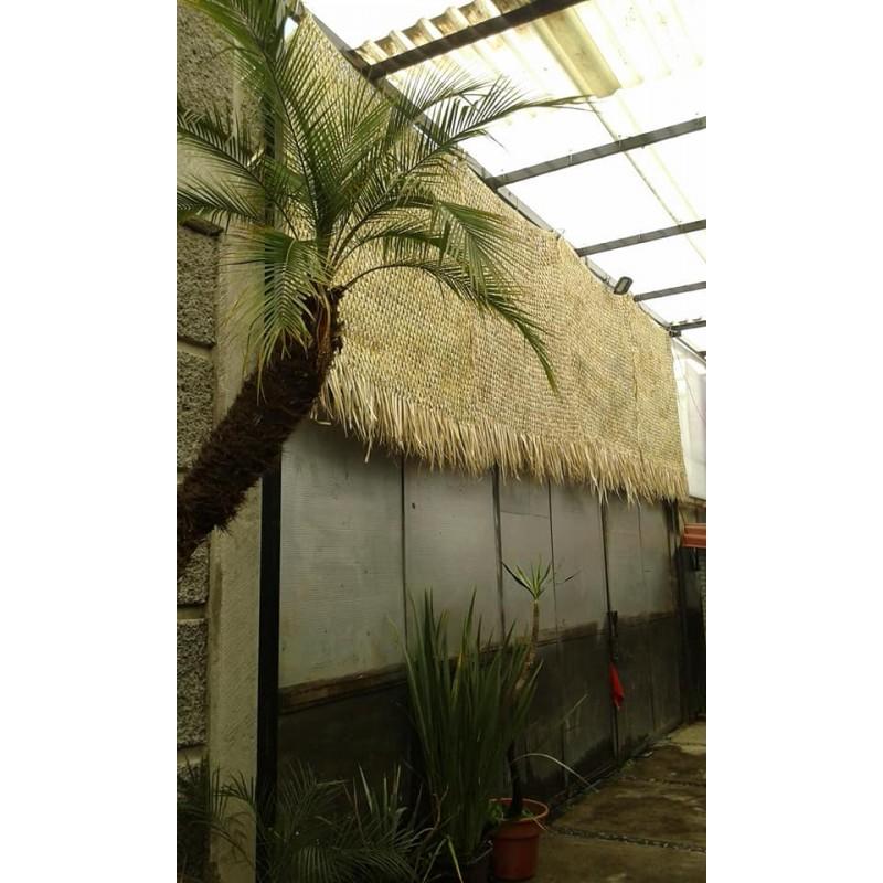 Pachon natural palm
